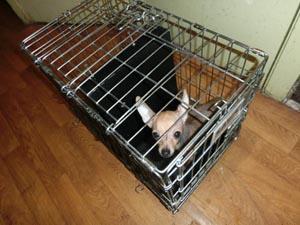 Вольер для щенка, разделенный